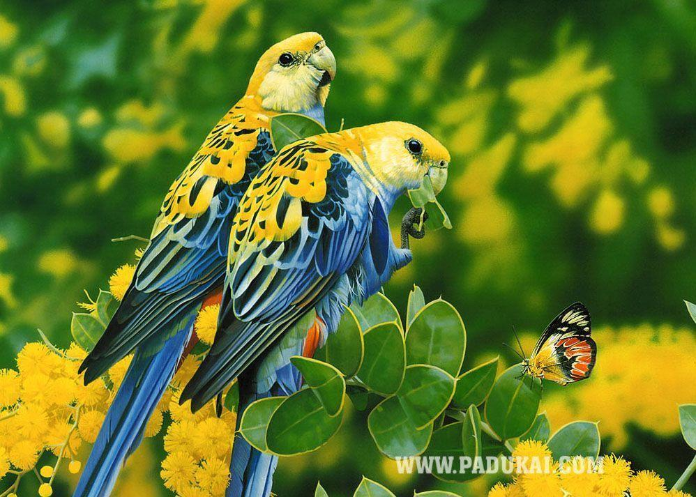 Birds Wallpapers | Where you can download all kind of Beautiful …
