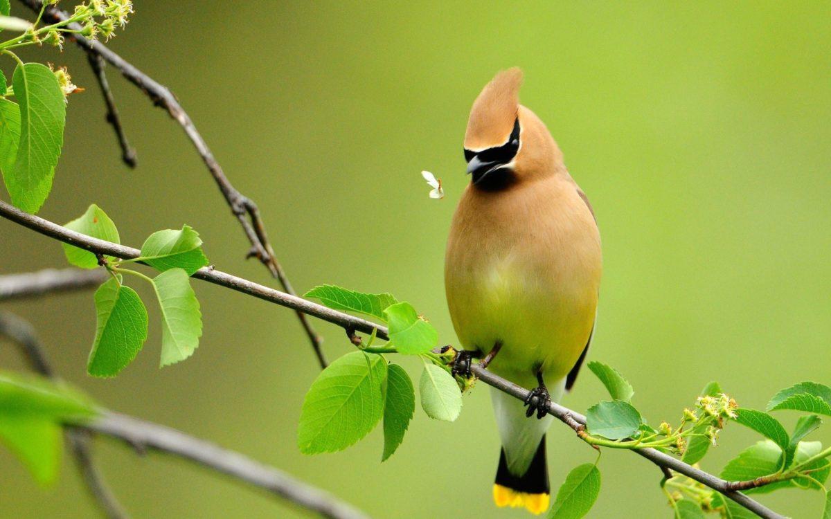 Beautiful Birds Wallpapers – Full HD wallpaper search