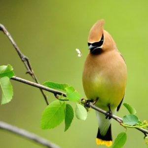download Beautiful Birds Wallpapers – Full HD wallpaper search