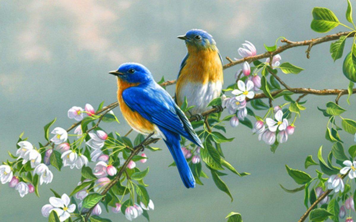 Birds Wallpapers – Full HD wallpaper search