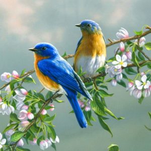 download Birds Wallpapers – Full HD wallpaper search