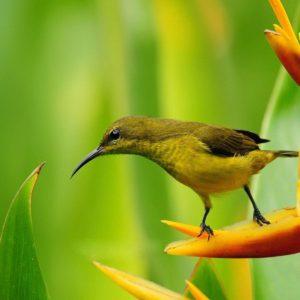 download Bird Wallpapers | fbpapa.