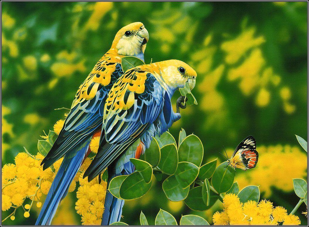 Hd Wallpapers Birds