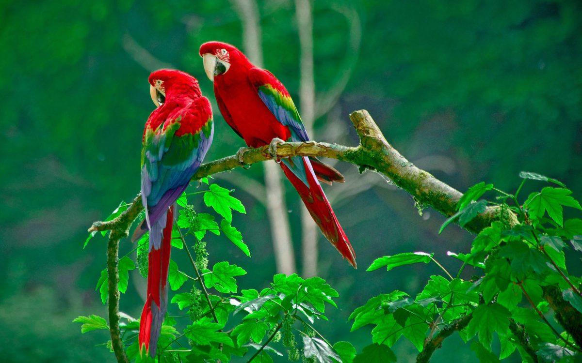 Animals Wallpapers | Birds Wallpapers | HD Desktop Backgrounds …