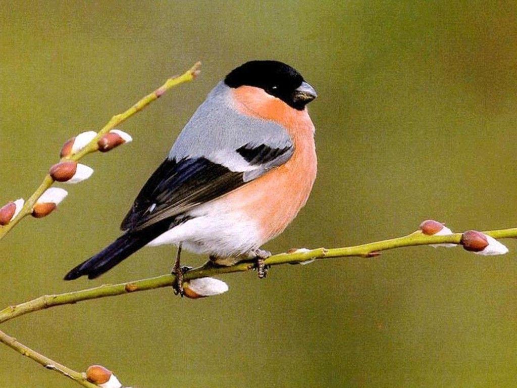 birds-wallpaper-images-1.jpg