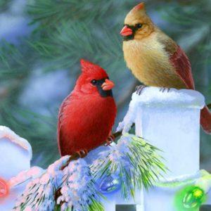 download Cardinal Bird Wallpapers