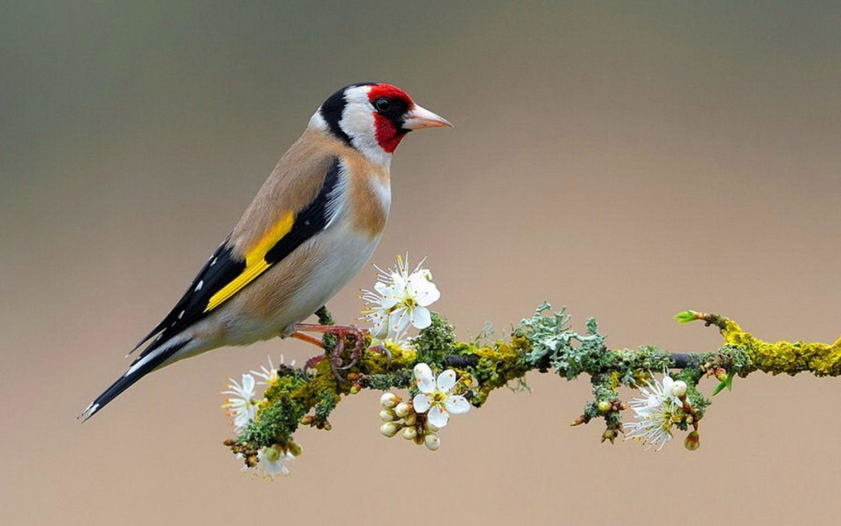Of Birds Wallpapers and Background
