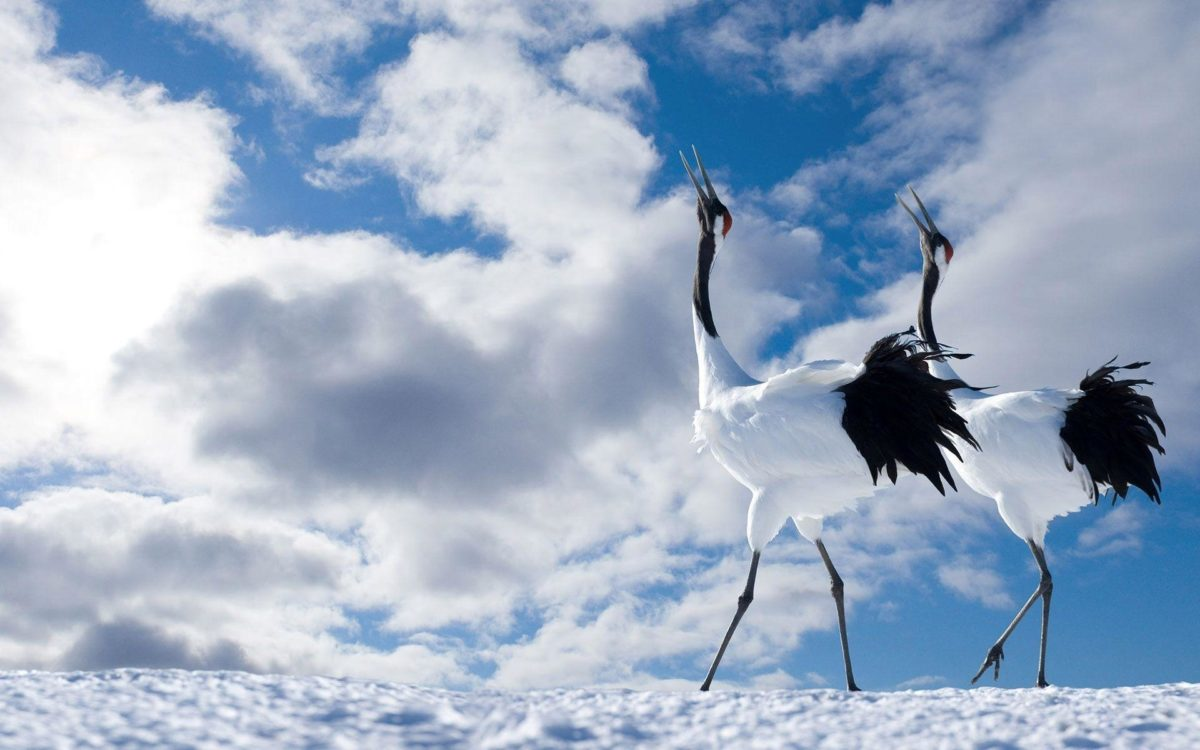 winter-birds-wallpaper-free-picture free picture