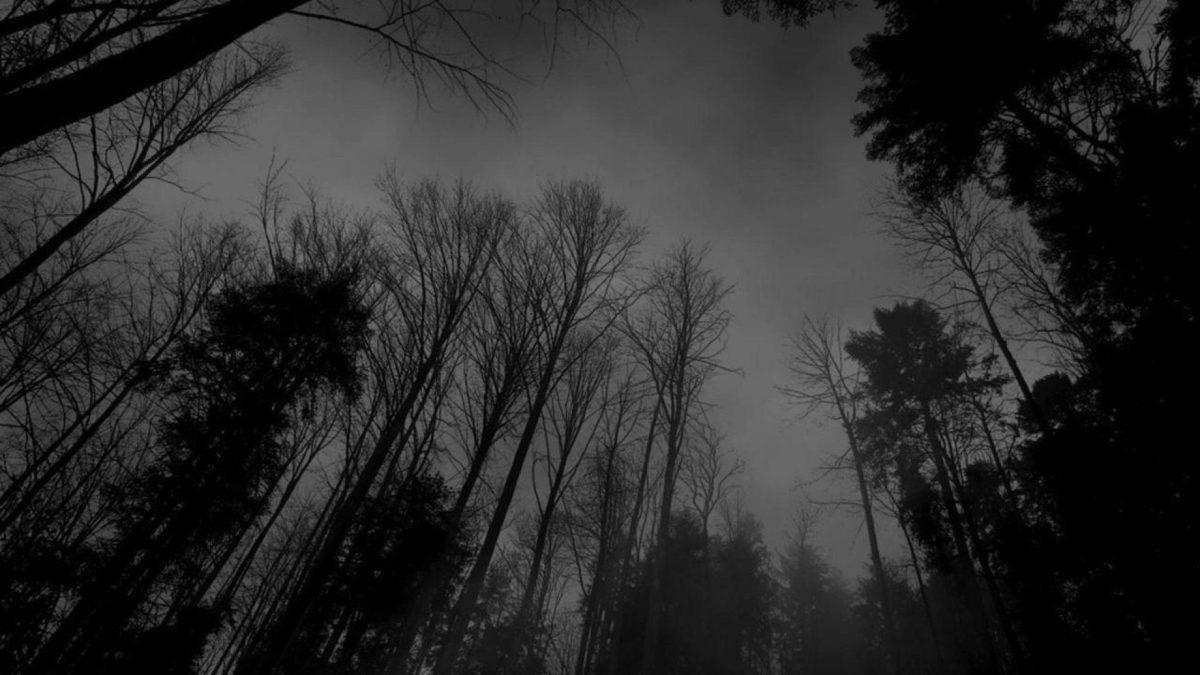 Image – Forest-black-white-dark-forest-wallpaper.jpg – Creepypasta …