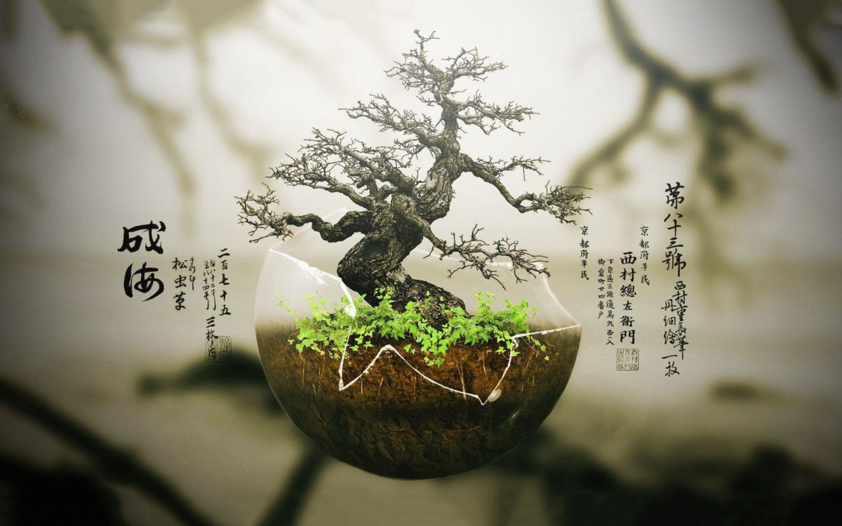 Bonsai Tree Wallpaper | Download Wallpapers