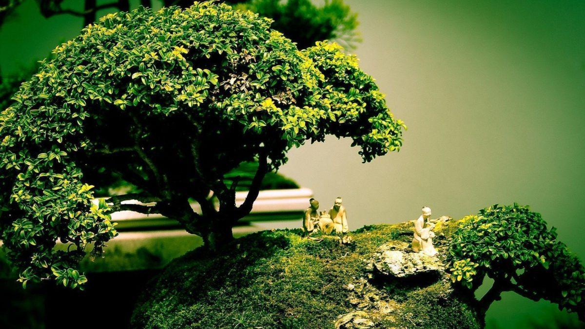 Beautiful Bonsai Tree HD Wallpapers | Photo and Wallpapers