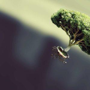 download Bonsai Tree Wallpaper – HD Wallpaper   HD Wallpapers Source