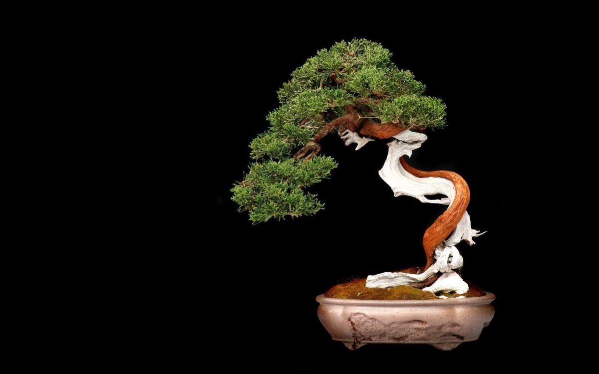 Bonsai tree-wallpaper-2560×1600 wallpaper | 2560×1600 | 231953 …