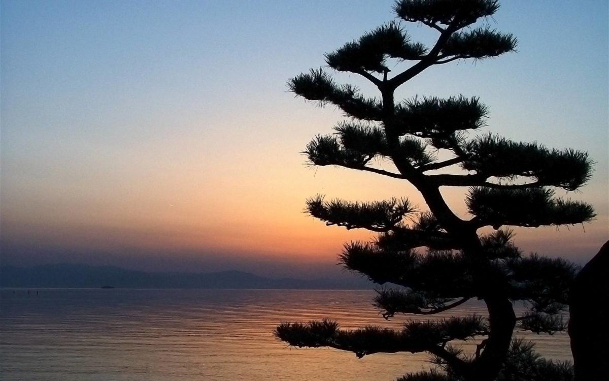 Nature Bonsai Tree in the Sunset widescreen wallpaper | Wide-