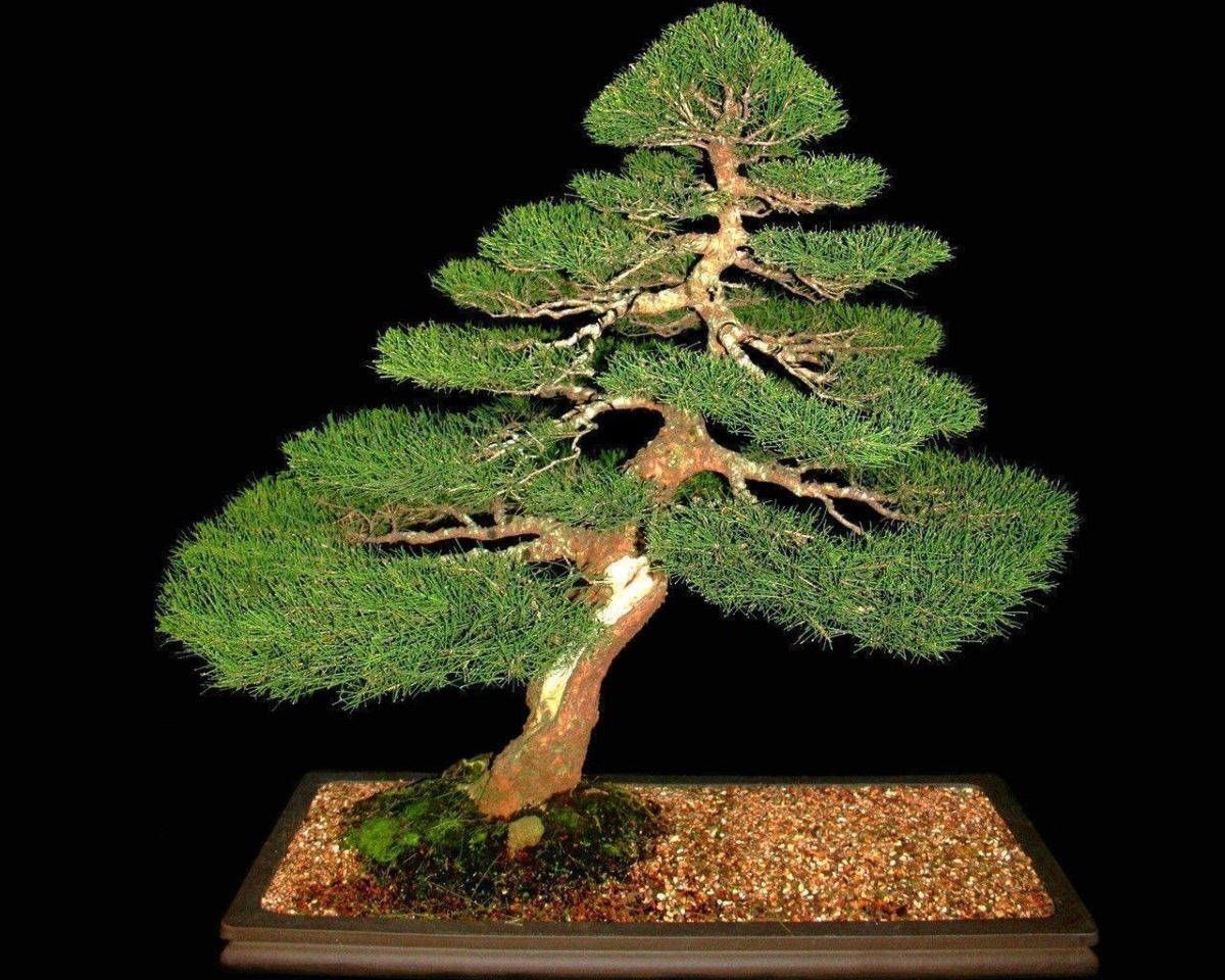 Download Trees Bonsai Wallpaper 1280×1024 | Wallpoper #392117