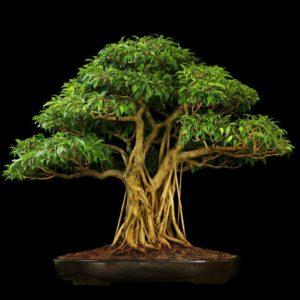 download Tree Bonsai Tree Black leaves wallpaper   2560×1600   67907 …
