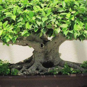 download Images For > Flower Bonsai Wallpaper