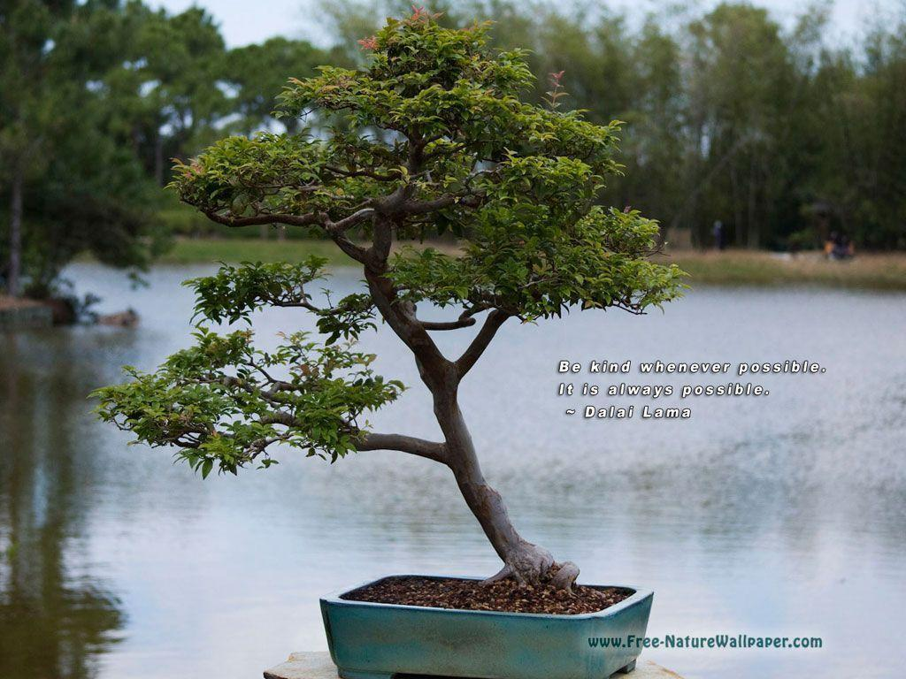 Quotes Wallpaper Pictures | Bonsai-Tree – 1024×768