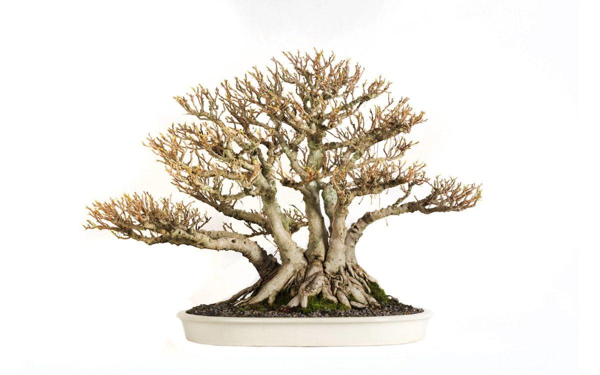 Tree Bonsai Tree leaves wallpaper | 2560×1600 | 67871 | WallpaperUP