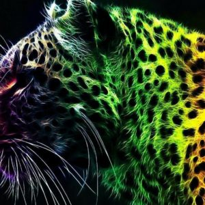 download Wallpapers For > Cool Cheetah Wallpapers