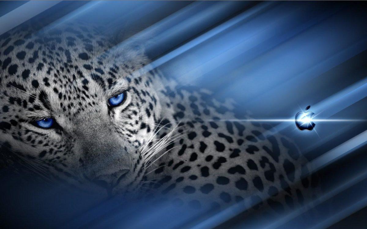 Cheetah MACOS wallpaper taken from Cheetah Print Wallpaper …