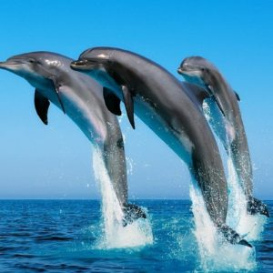 download 171 Dolphin Wallpapers | Dolphin Backgrounds