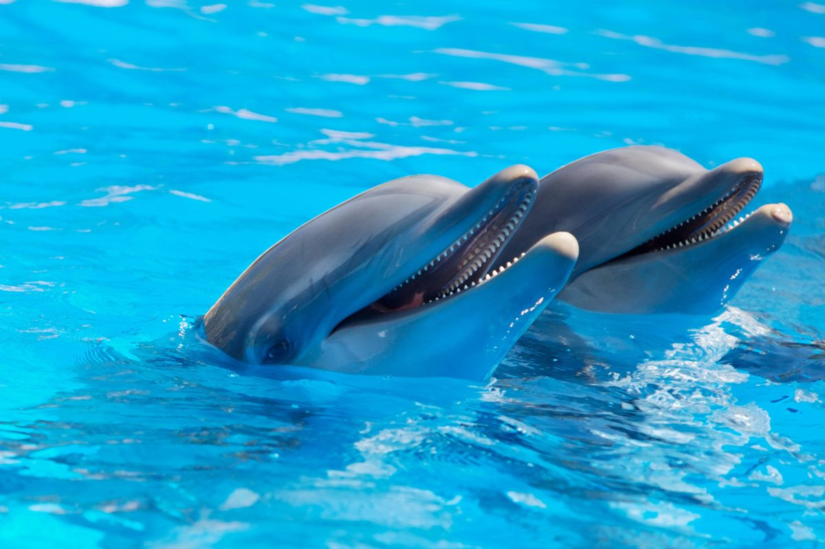 171 Dolphin Wallpapers   Dolphin Backgrounds Page 3