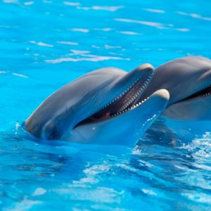 download 171 Dolphin Wallpapers | Dolphin Backgrounds Page 3