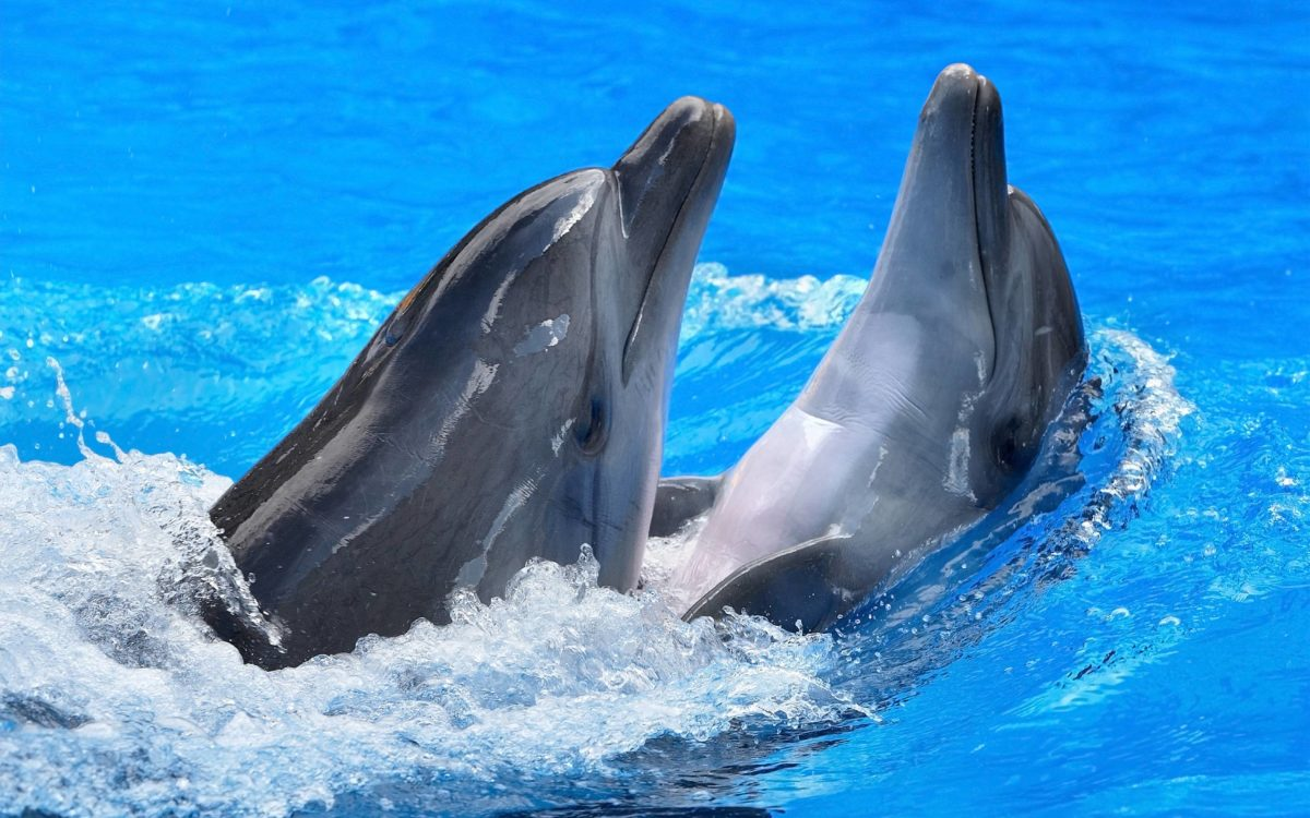 171 Dolphin Wallpapers   Dolphin Backgrounds