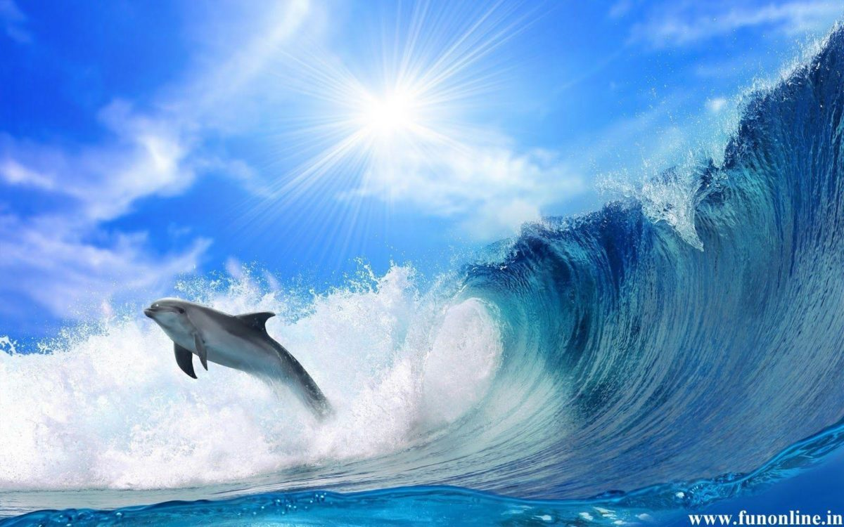 Jumping Dolphin Wallpaper 16 Cool Background 2560×1440 HD …