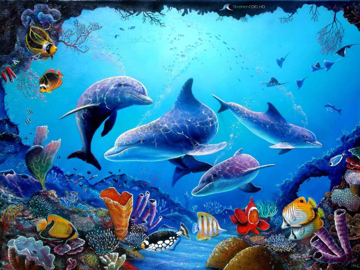 Download Dolphin HD Wallpapers – HD Wallpapers Inn