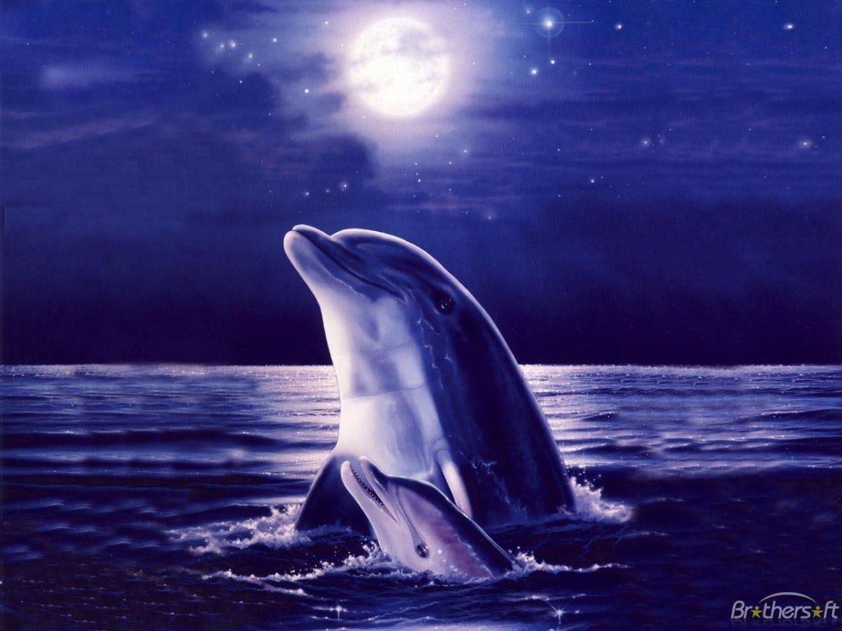 3D Dolphin Wallpaper – www.