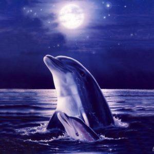 download 3D Dolphin Wallpaper – www.