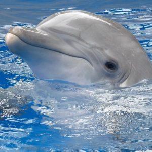 download Dolphin Wallpaper Computer Desktop – imageswall.com