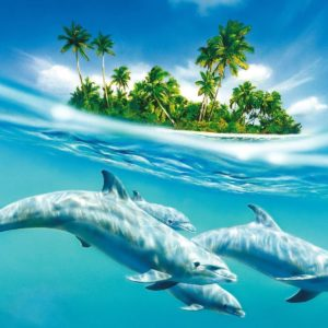 download Dolphin Animated wallpaper