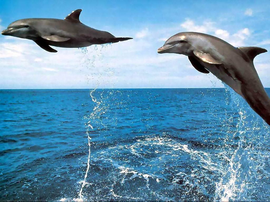 3D Jumping Dolphin Wallpapers – HD Wallpapers Inn