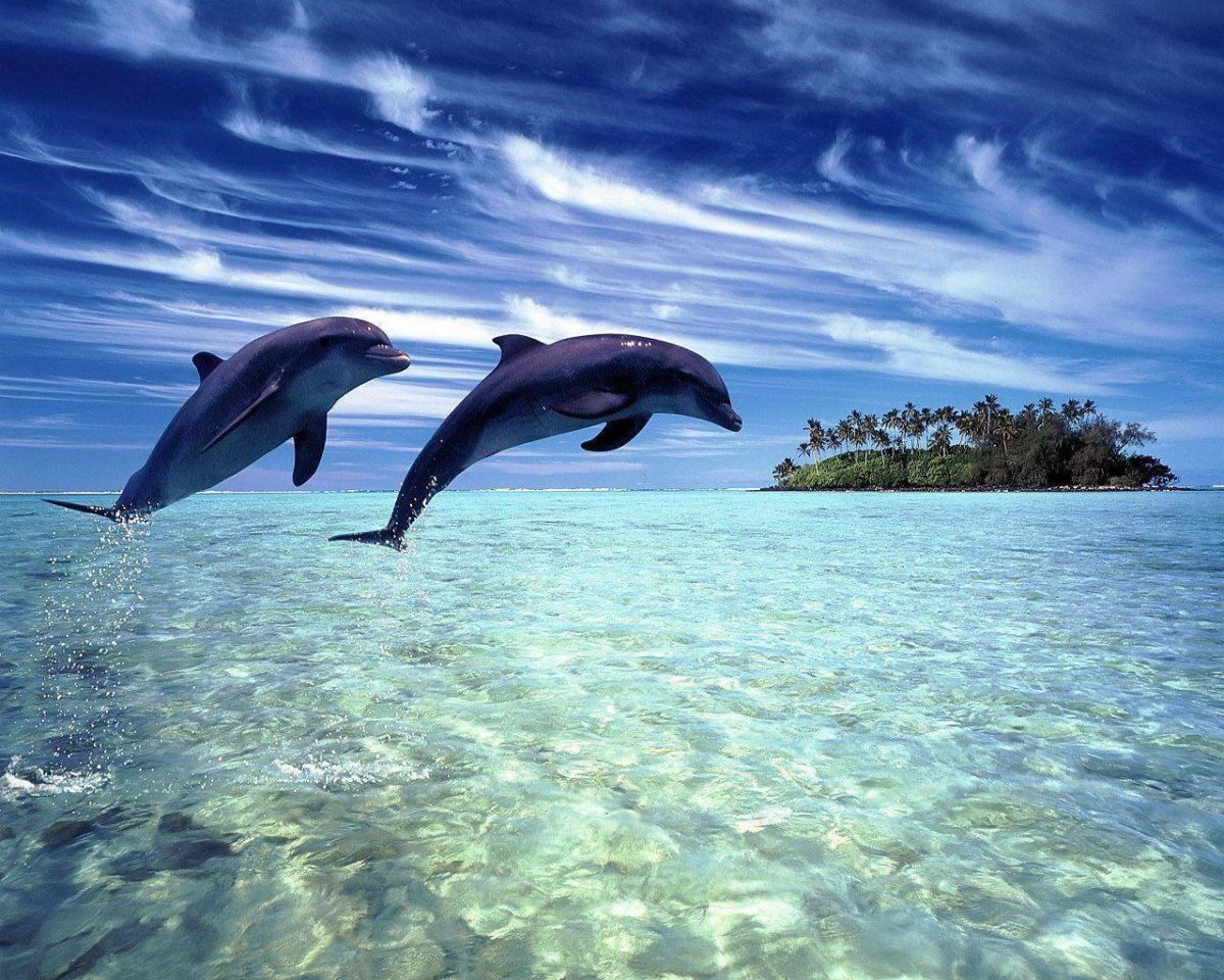Dolphin Wallpapers   Sky HD Wallpaper