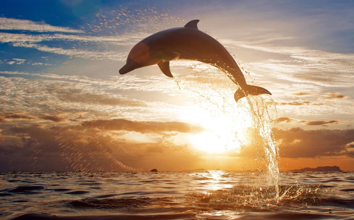 175 Dolphin Wallpapers   Dolphin Backgrounds Page 2