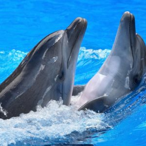 download Dolphin Wallpaper