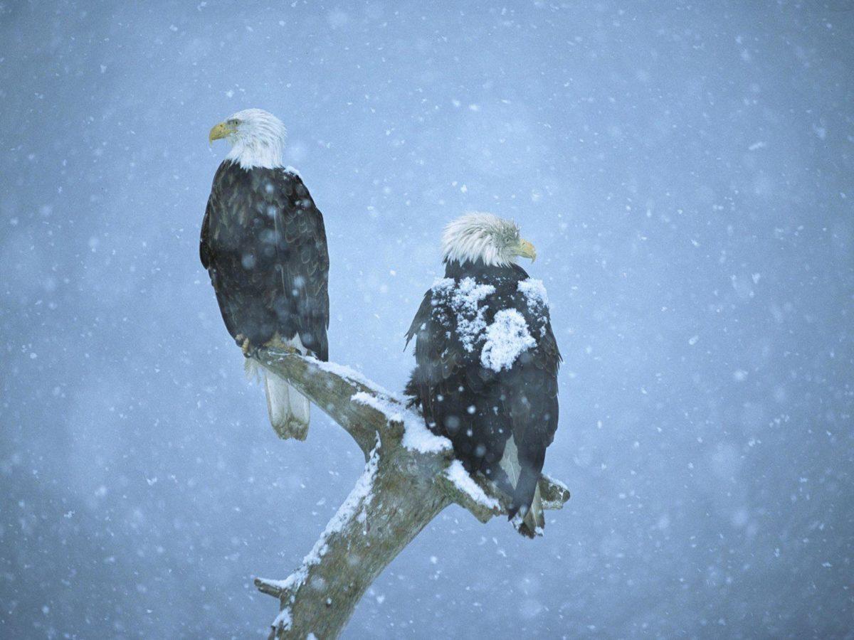 Winter Birds Desktop Wallpaper | Winter Bird Photos | Cool Wallpapers