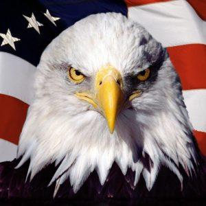 download Images For > 3d Eagle Wallpaper Desktop