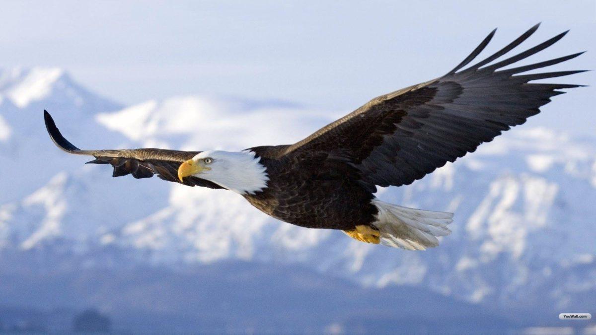 Eagle Desktop Wallpaper: Youwall Flying Eagle Wallpaper …