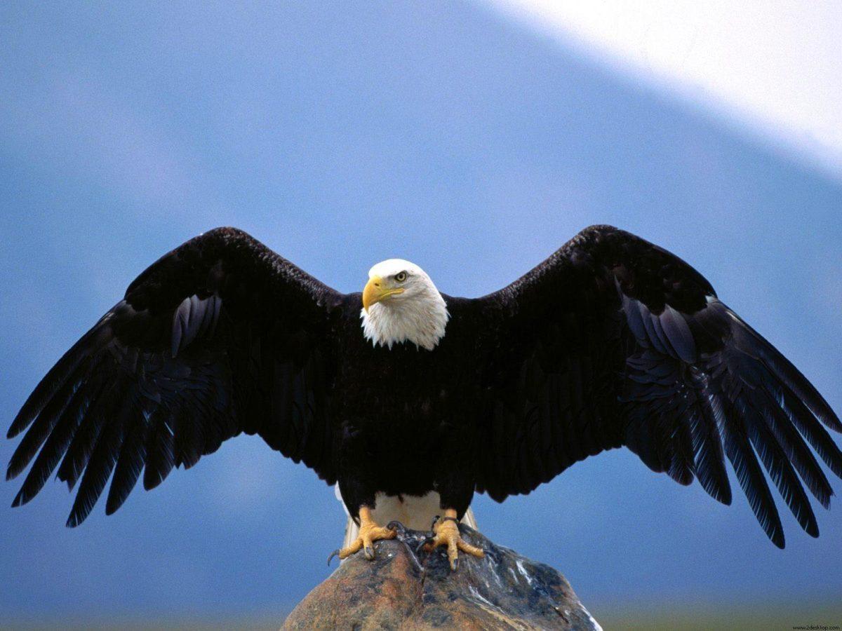 Eagle Desktop Wallpaper: Eagle Wallpapers Hd Free Download #9262 …