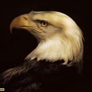 download Animals For > 3d Eagle Wallpaper Desktop