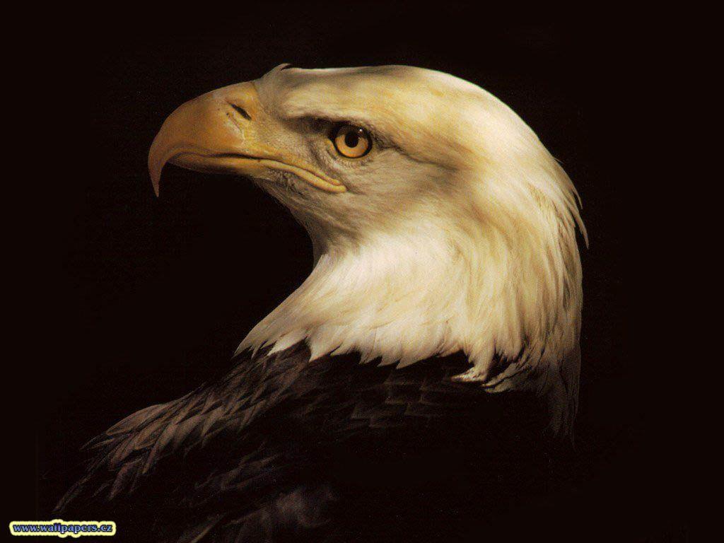 Animals For > 3d Eagle Wallpaper Desktop