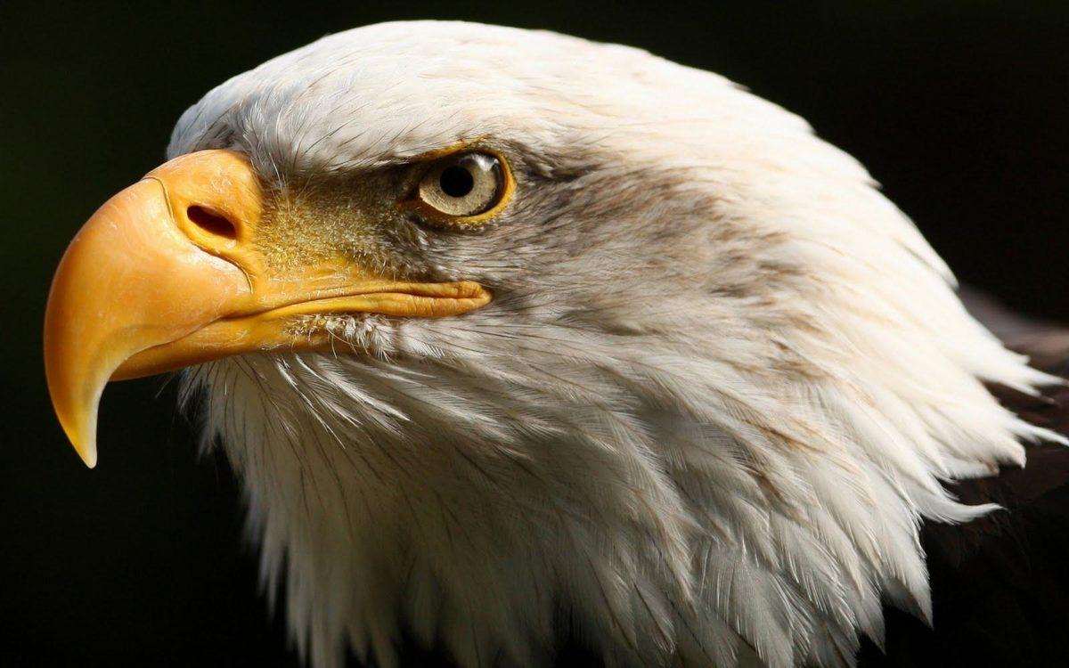 Best Javan Hawk-Eagle Wallpaper Picture #2479 Wallpaper | High …