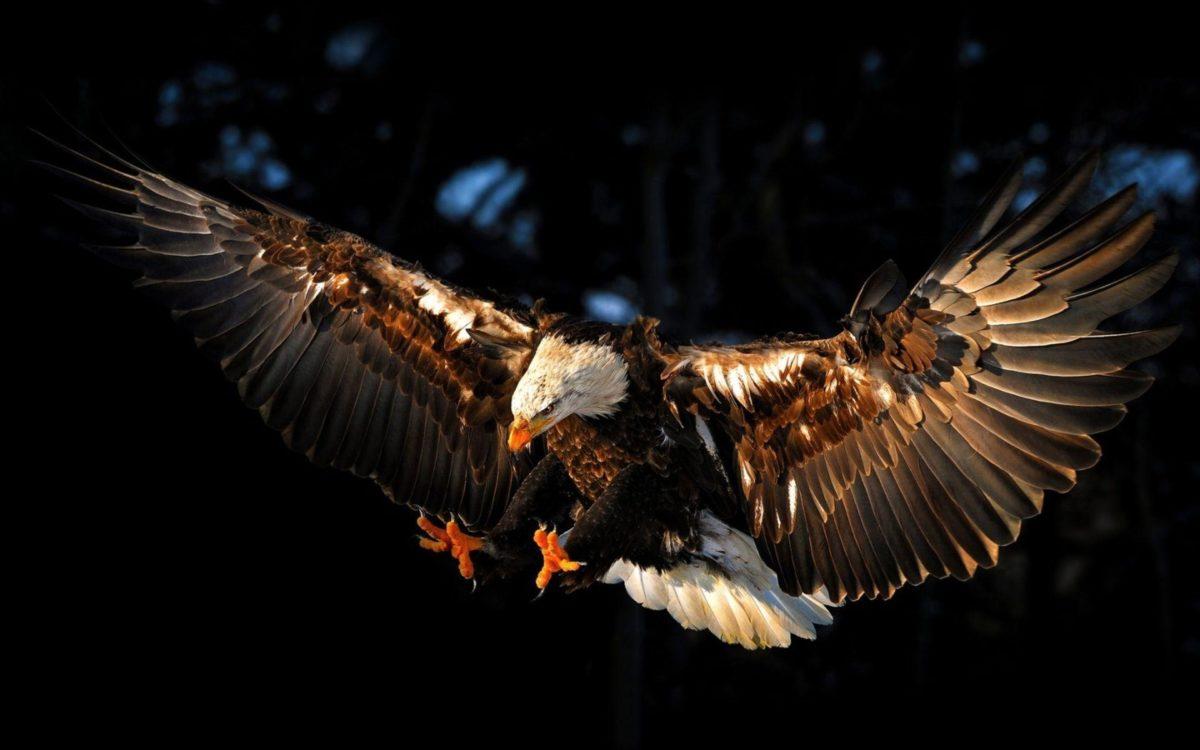 Eagle Desktop Wallpapers Amazing Collection – WallpaperSafari