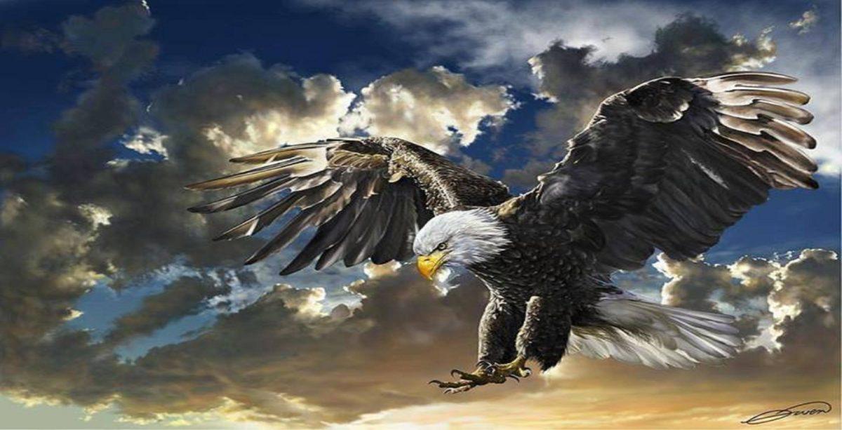 Eagle Desktop Wallpaper – WallpaperSafari