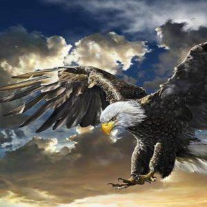 download Eagle Desktop Wallpaper – WallpaperSafari