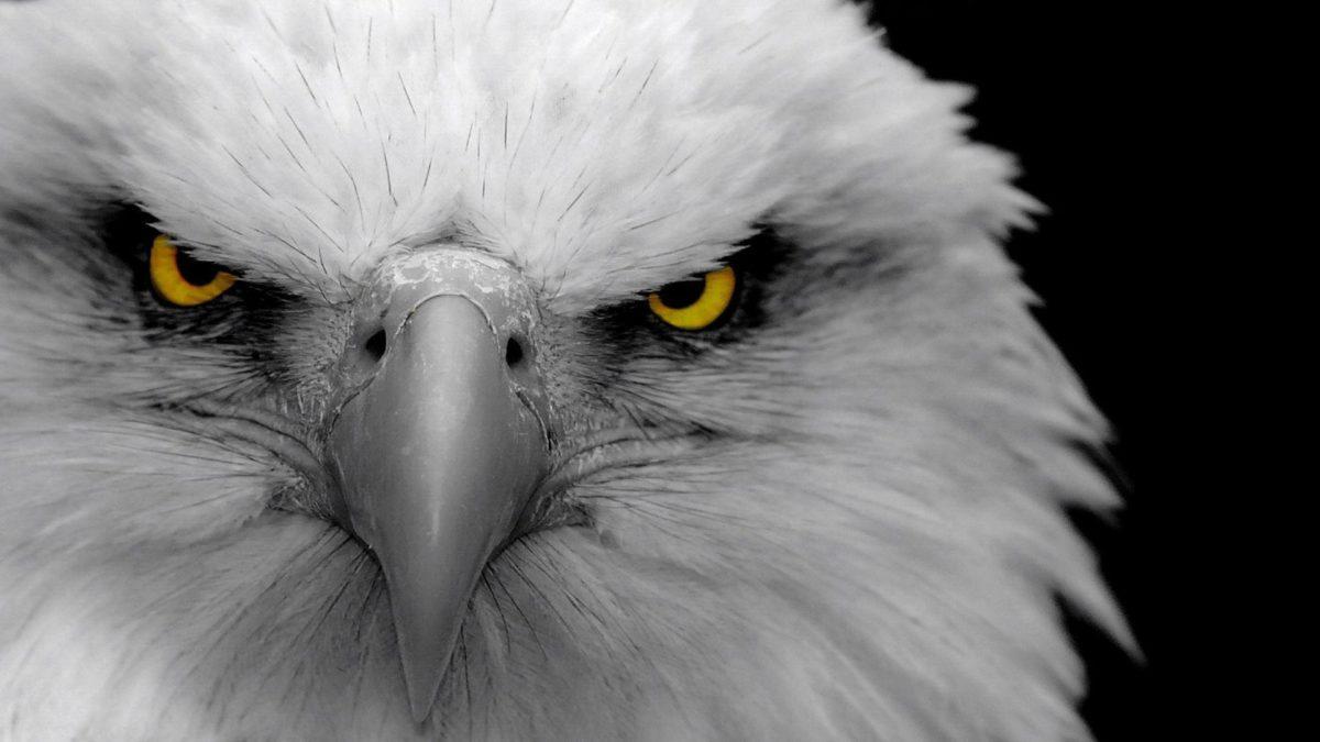 Full HD 1080p Eagle Wallpapers HD, Desktop Backgrounds 1920×1080 …